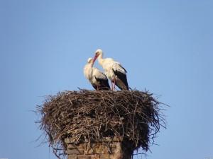 stork_nest_3264x24481